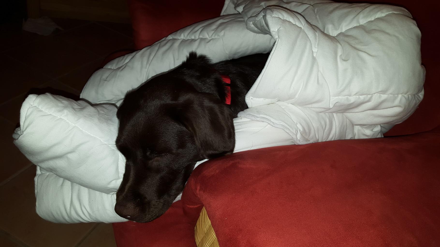 Ich mache es mir mit der Decke lieber auf Oma's Sessel bequem...