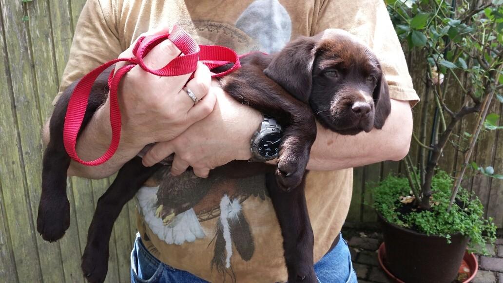 Bei Papa auf dem Arm...da kann ich so richtig abhängen.