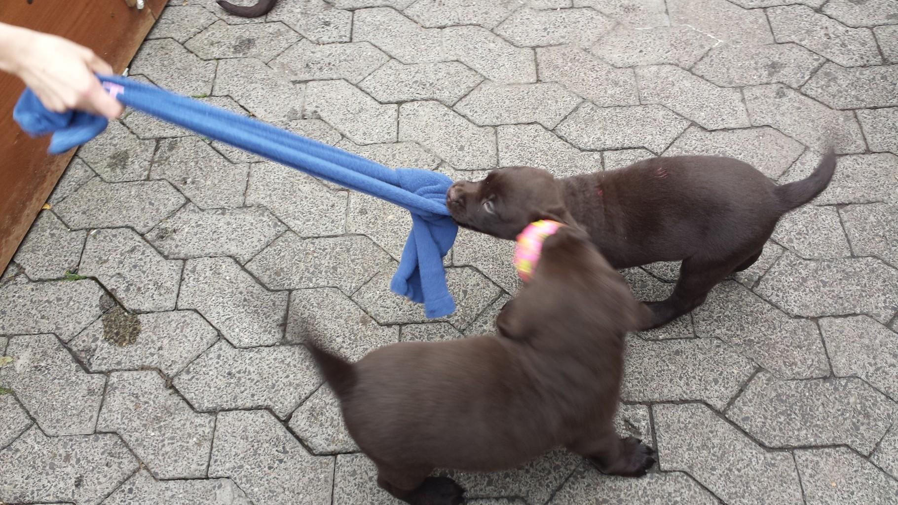 Hey, gib das her...ich will damit spielen.