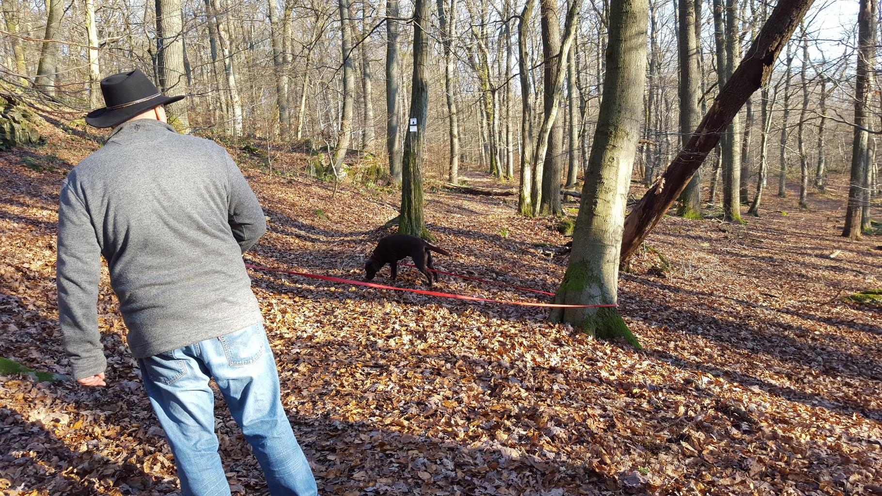 Herrlicher Spaziergang im Wald bei Sonnenschein...