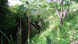 原木林 草刈前