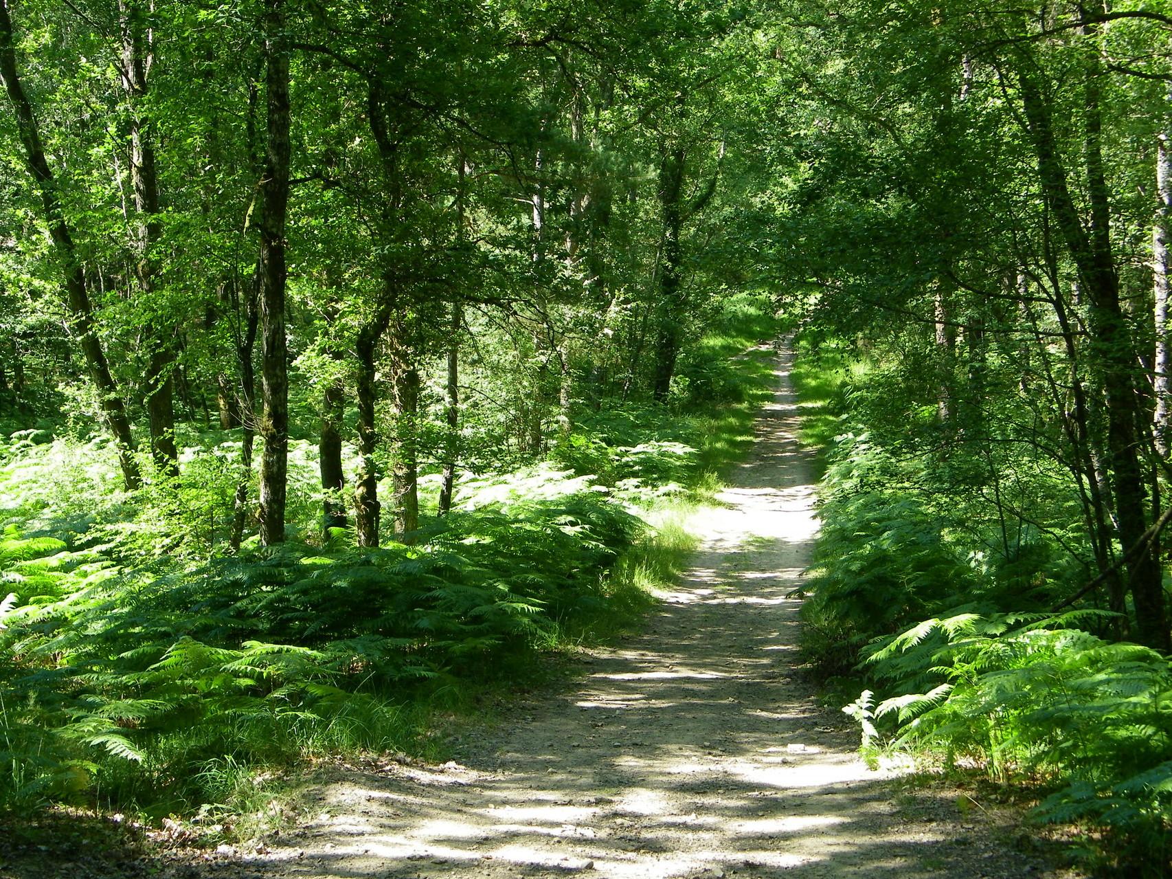 Forêt de Sillé le Guillaume © JP Taupin