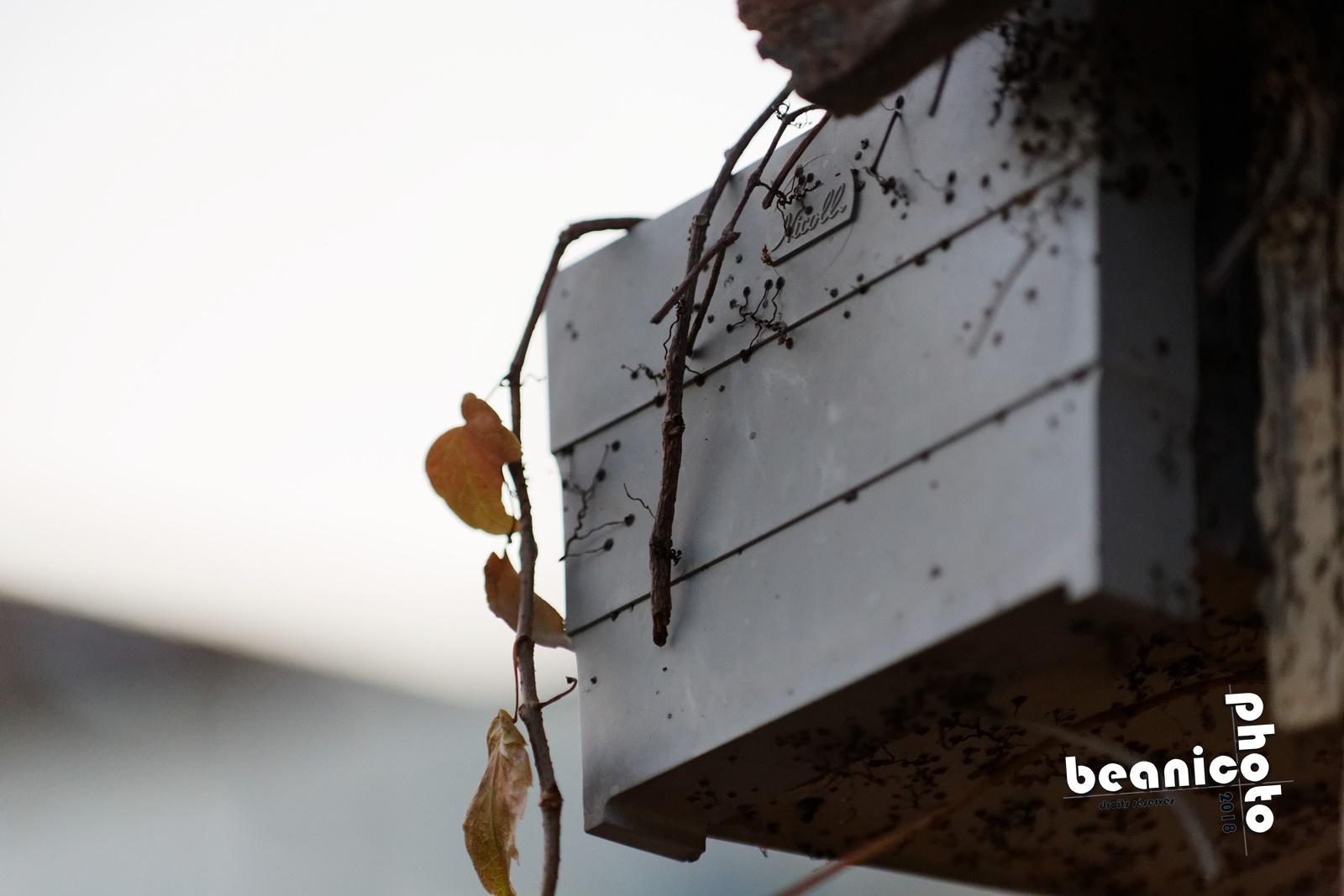 beanico-photo - détail - Canon 5D IV + Tamron 90mm macro + Kenko 1,5x