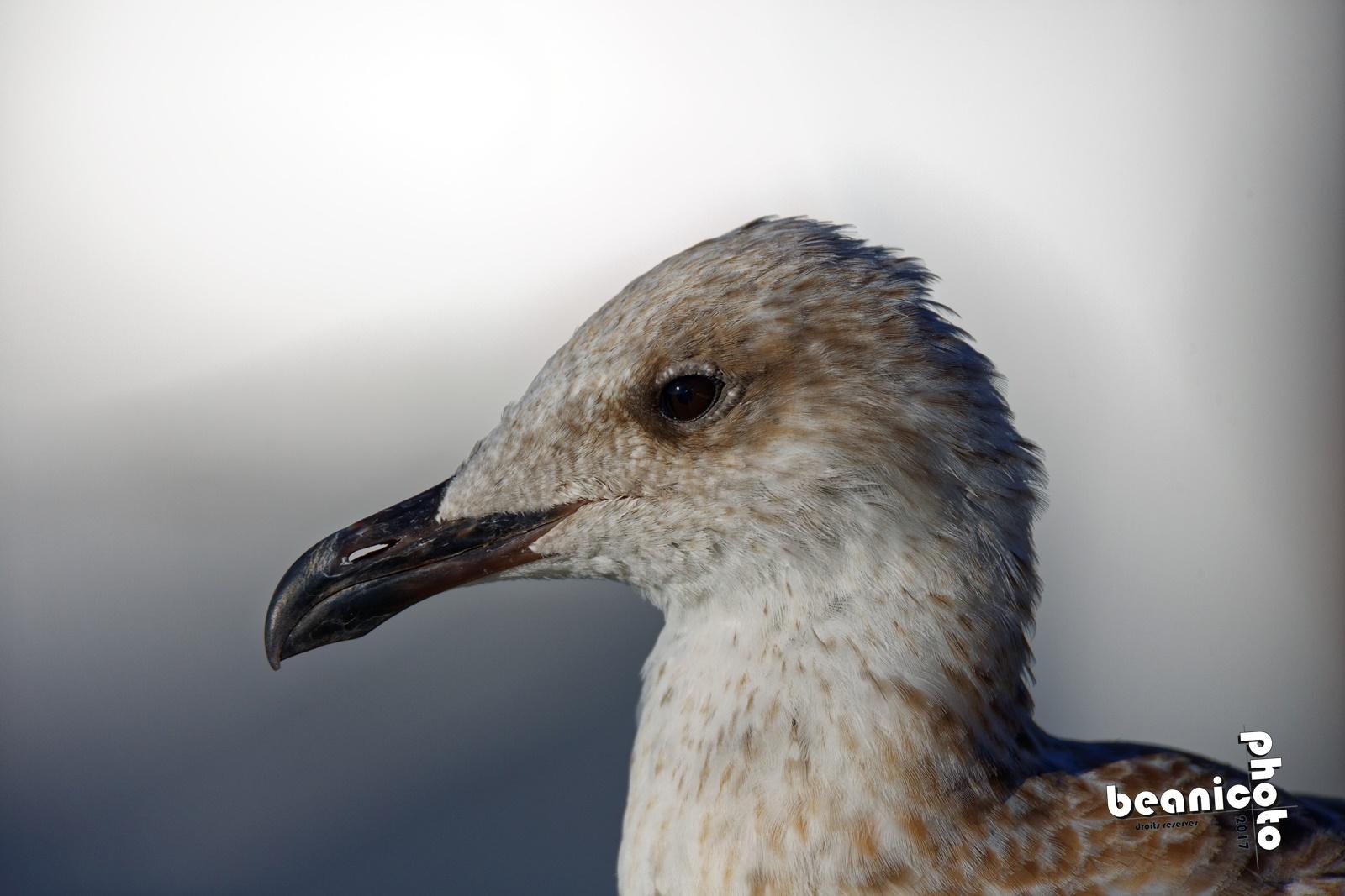 Les Oiseaux d'Oléron