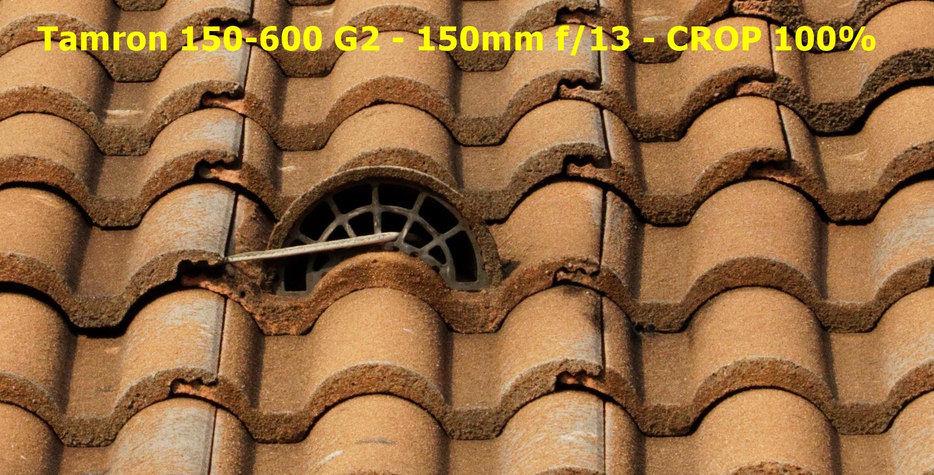 Canon 5DIV + Tamron 150-600 G2 - Test piqué - beanico-photo