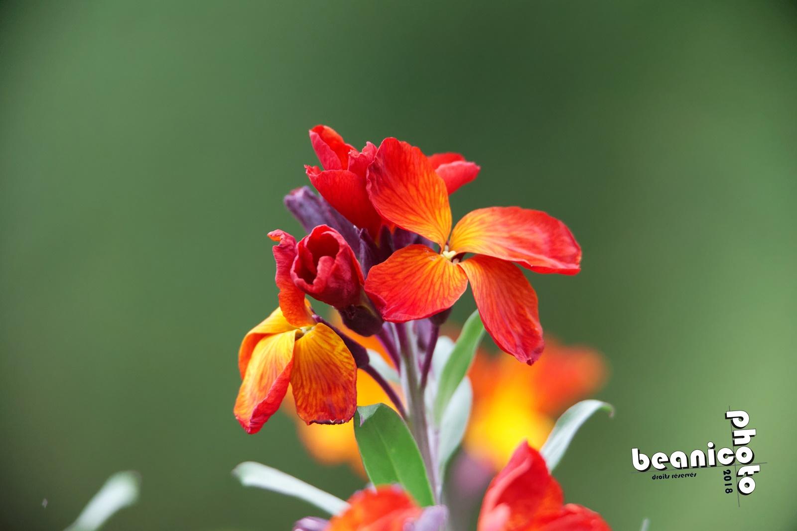 beanico-photo - Fleurs - Canon 5D IV + Tamron 150-600 G2 + Kenko 1,5x