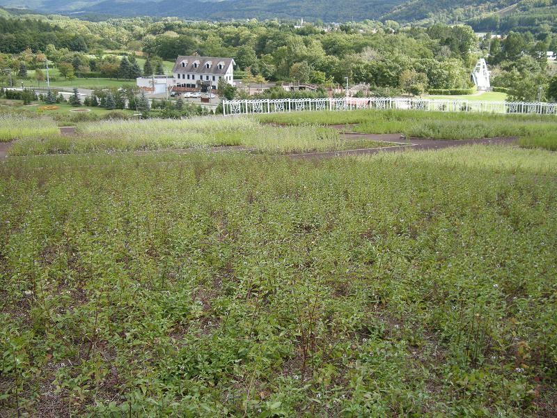 北海道紋別郡滝上町ハーブガーデン
