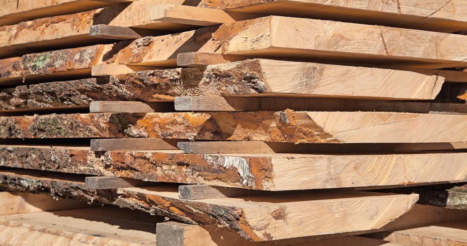 Aufgesägte Baumstämme bilden den Rohstoff für die Herstellung von Vollholz und Fensterbänken daraus