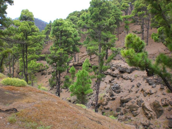 Visionssort Kieferwälder ca 1100 m ÜM
