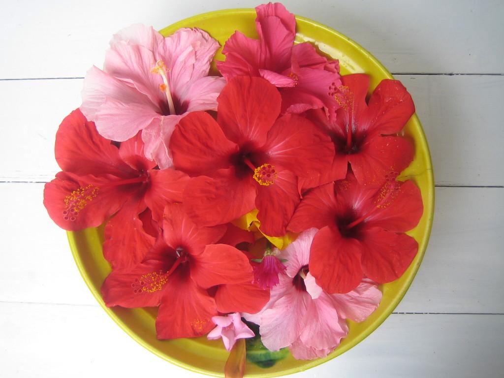 Blumenopfer Wasserelement