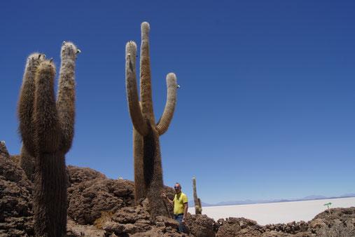Salzwüsten Tour zur Insel Isla del Pescado, gigantische Kakteen warten hier