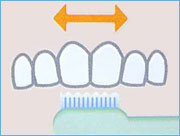 歯ブラシの大きさは上前歯2本分