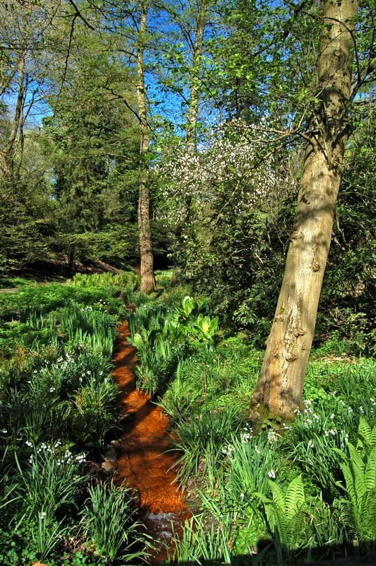Botanischer Garten Rombergpark, Dortmund - Eisenockerhaltiges Grubenwasser von der früheren Zeche Glückaufsegen.