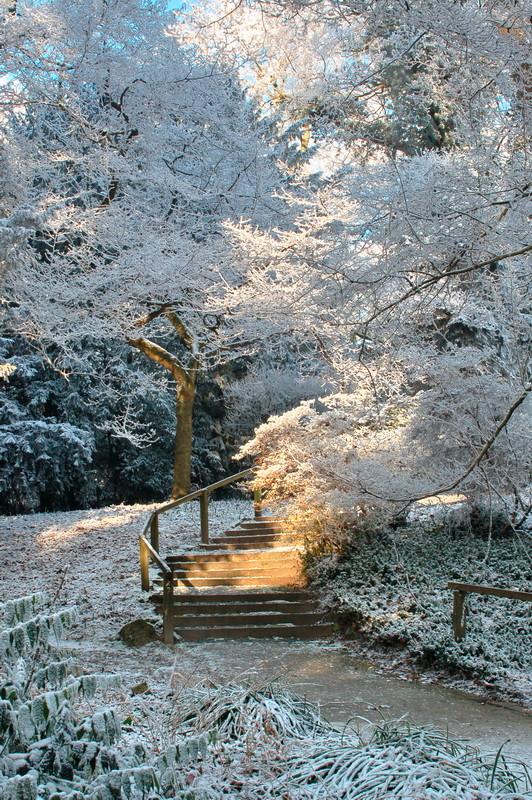 Botanischer Garten Rombergpark, Dortmund -