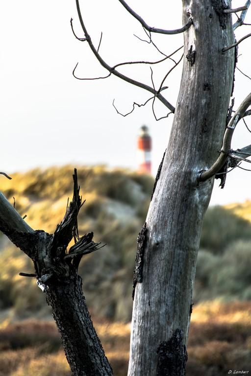 Bois D7-15_026R x20