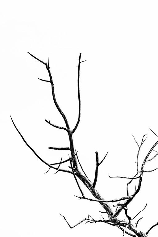Bois D7-16_027R x20