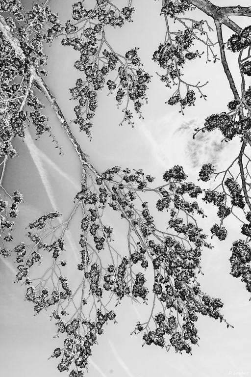 Bois D7-16_025R x20