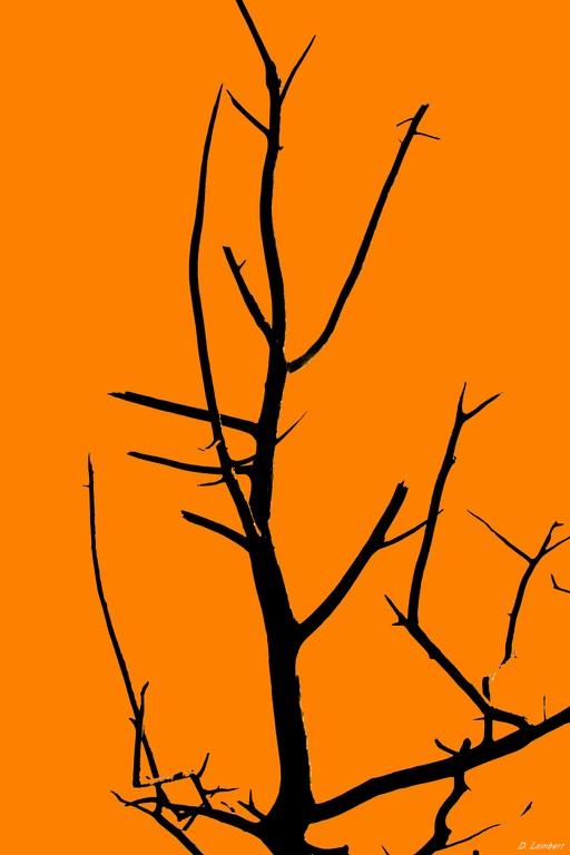 Bois D7-16_029R x20