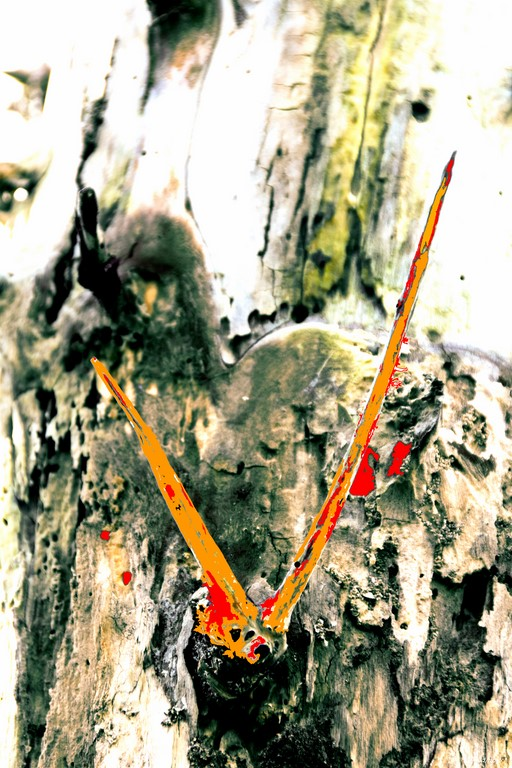 Bois D7-16_007R x20