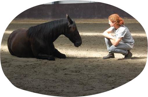 Echt contact met paarden