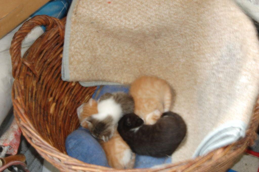 unsere Katzenbabys...