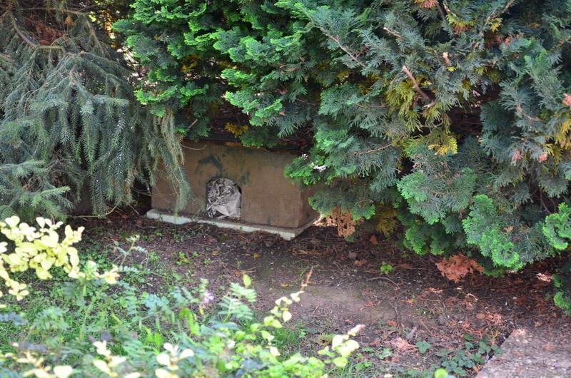 Im parkähnlichen Garten ein Igel-Paradies
