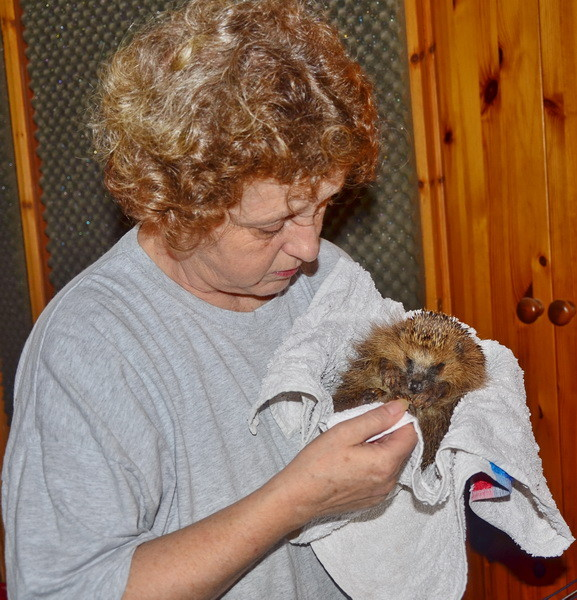 Jutta Knierim-Haustein mit einem verletzten Igel