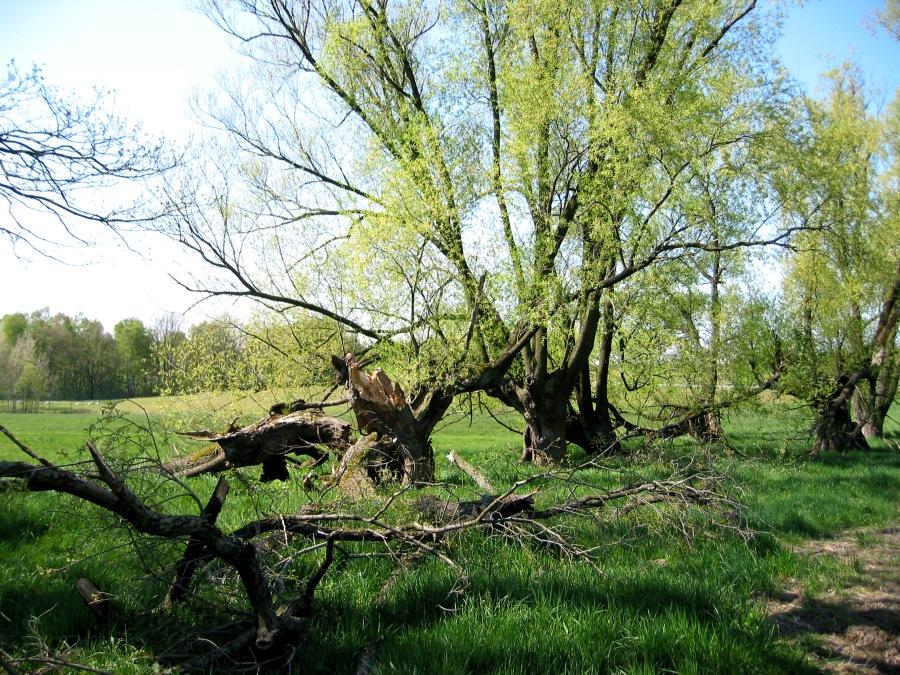 Alte Weiden am Hüttertal
