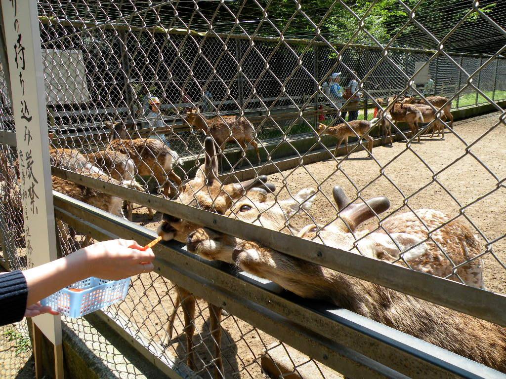 鹿島神宮の森にはかつて多くの鹿が生息