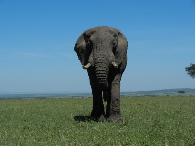 One of the big Five....