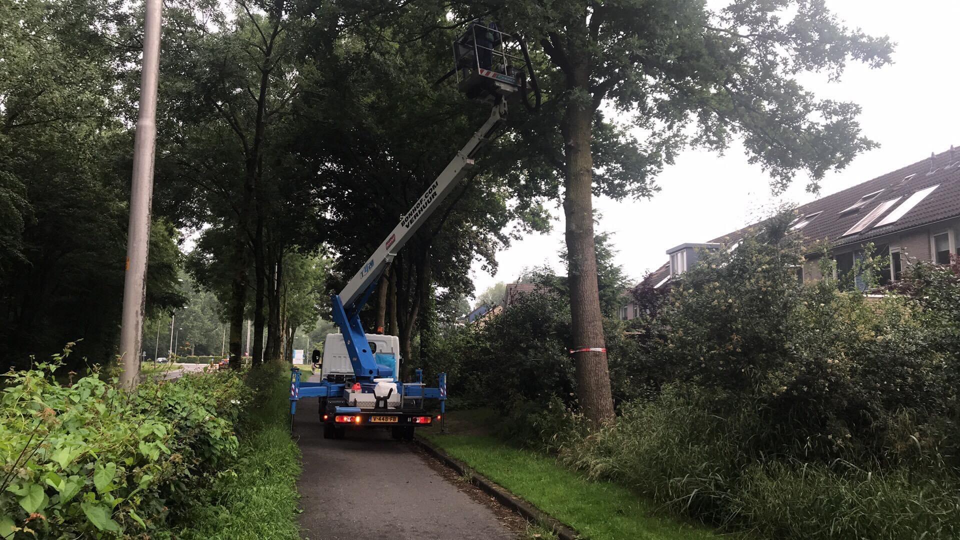 Eikenprocesierupesen bestrijden gemeente Nijkerk