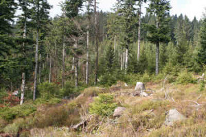 Habitat für Auerwild
