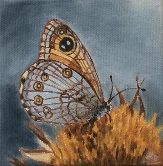 Schmetterling ocker-grau