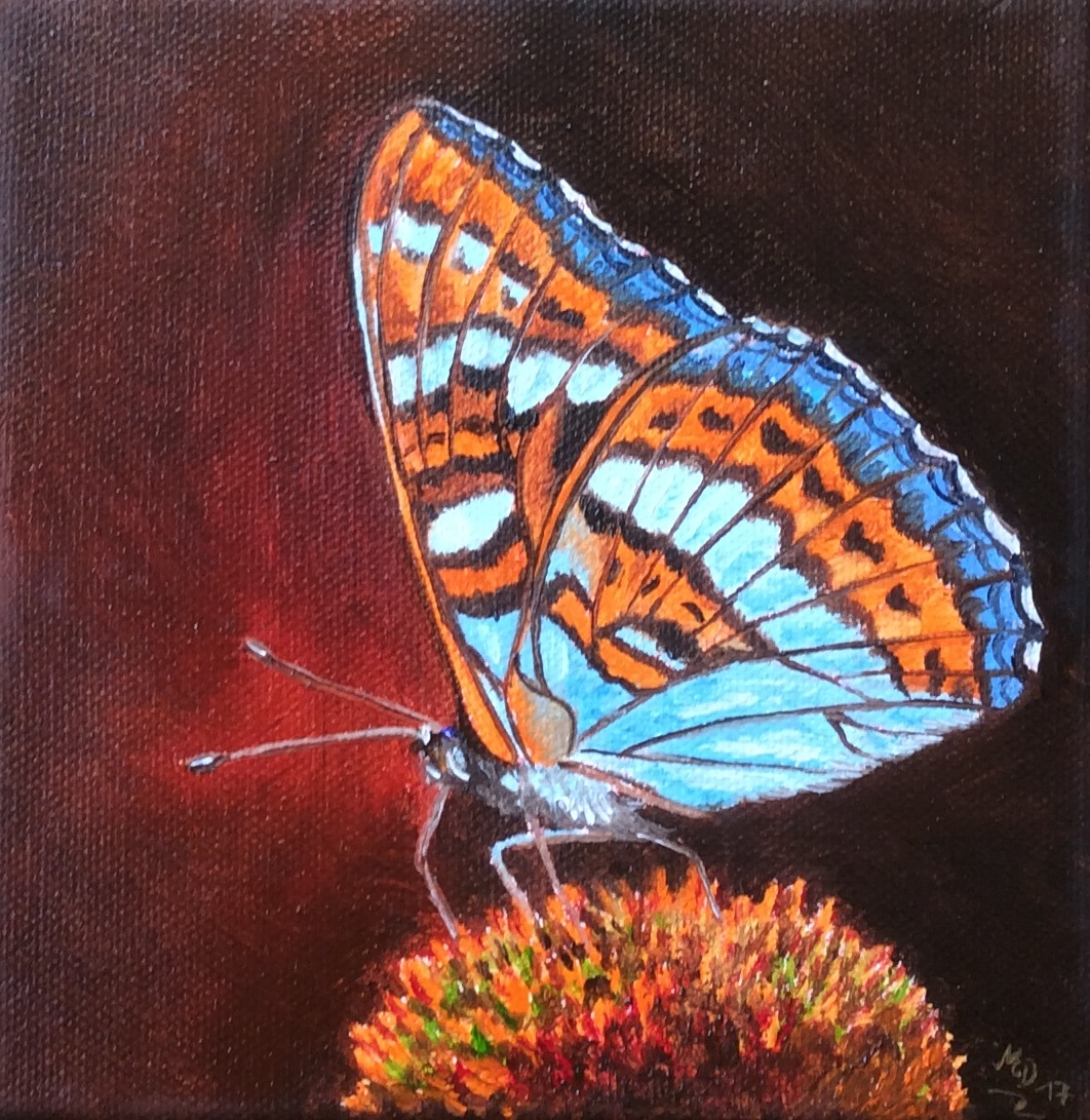 Zauberhafter Schmetterling
