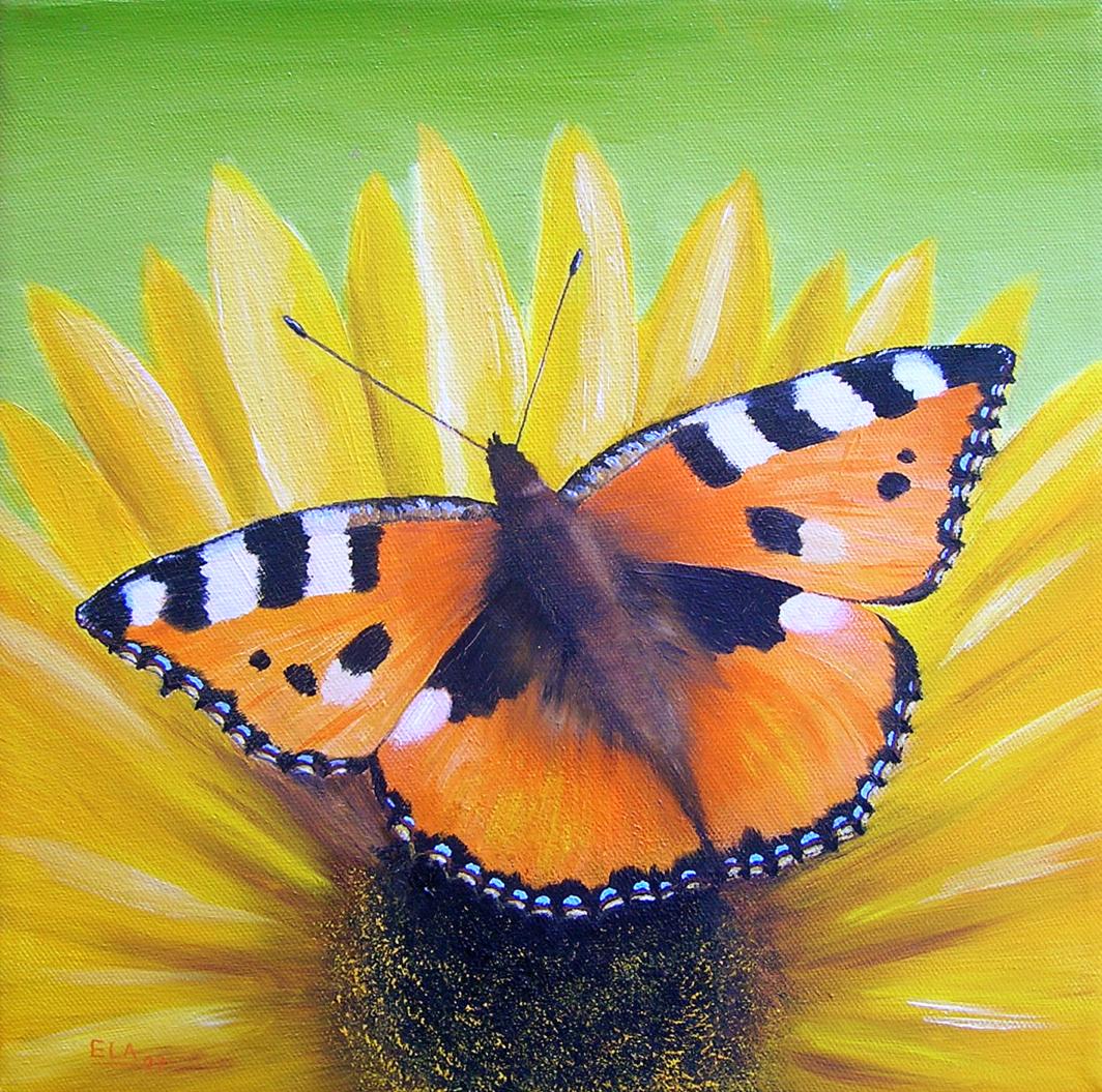 Schmetterling - Kleiner Fuchs auf Sonnenblume