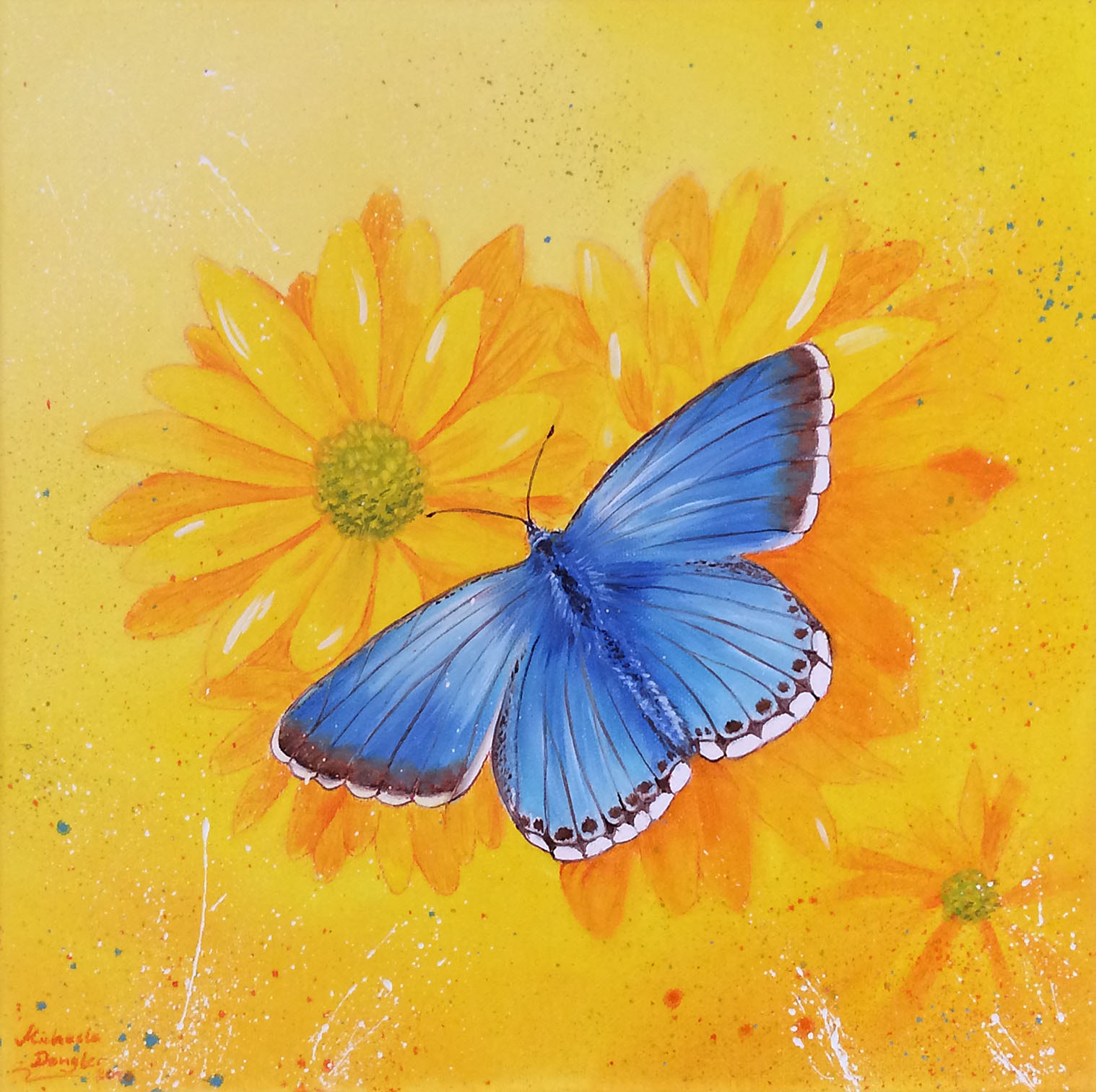 Schmetterling - Bläuling