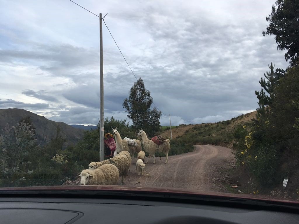Vorsicht Gegenverkehr!
