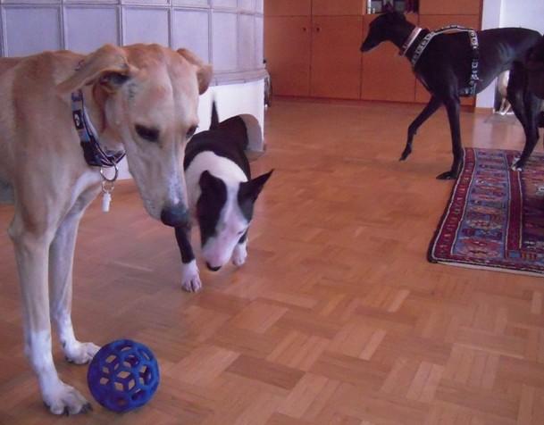 Ball...?!