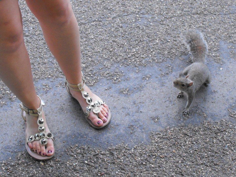 Noémie et son ami l'écureuil