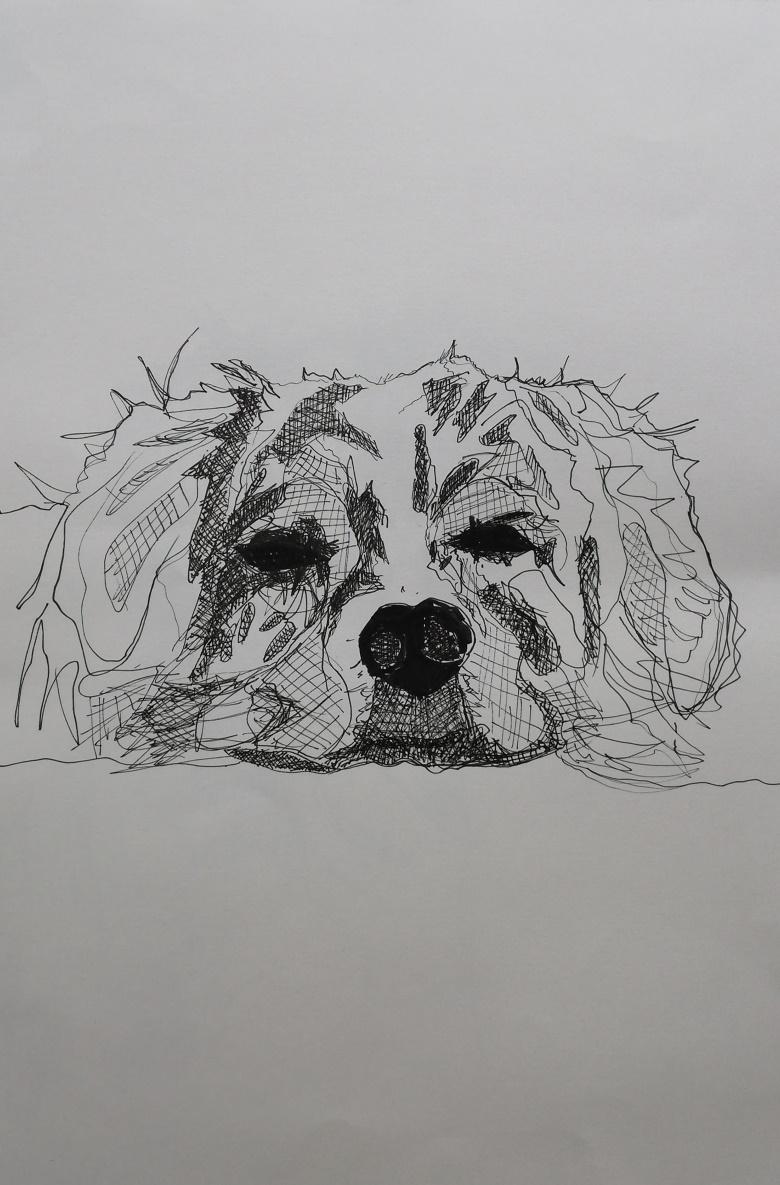 Hund 10