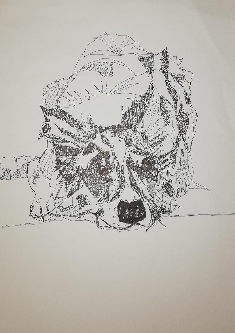 Hund 11