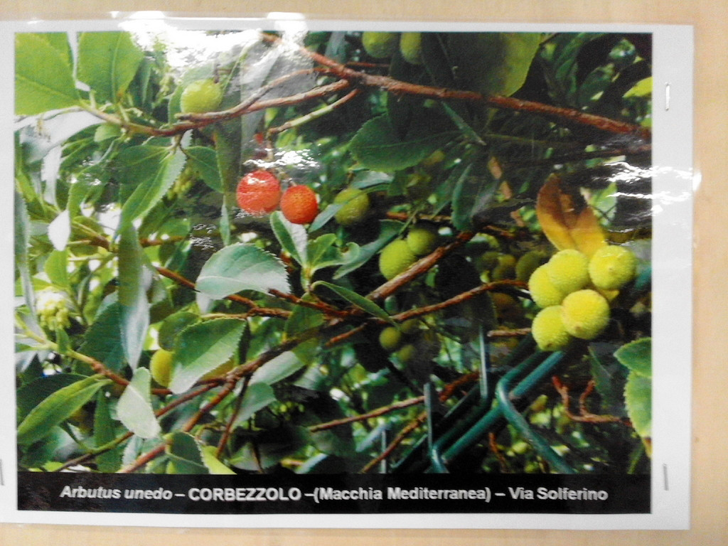 """La sezione """"Alberi e arbusti a Monza"""" di Guglielmo"""