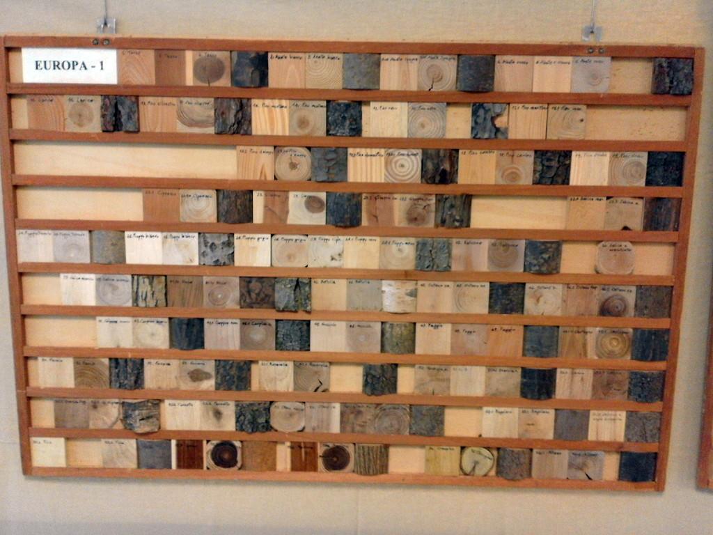 I legni del mondo... di Guglielmo