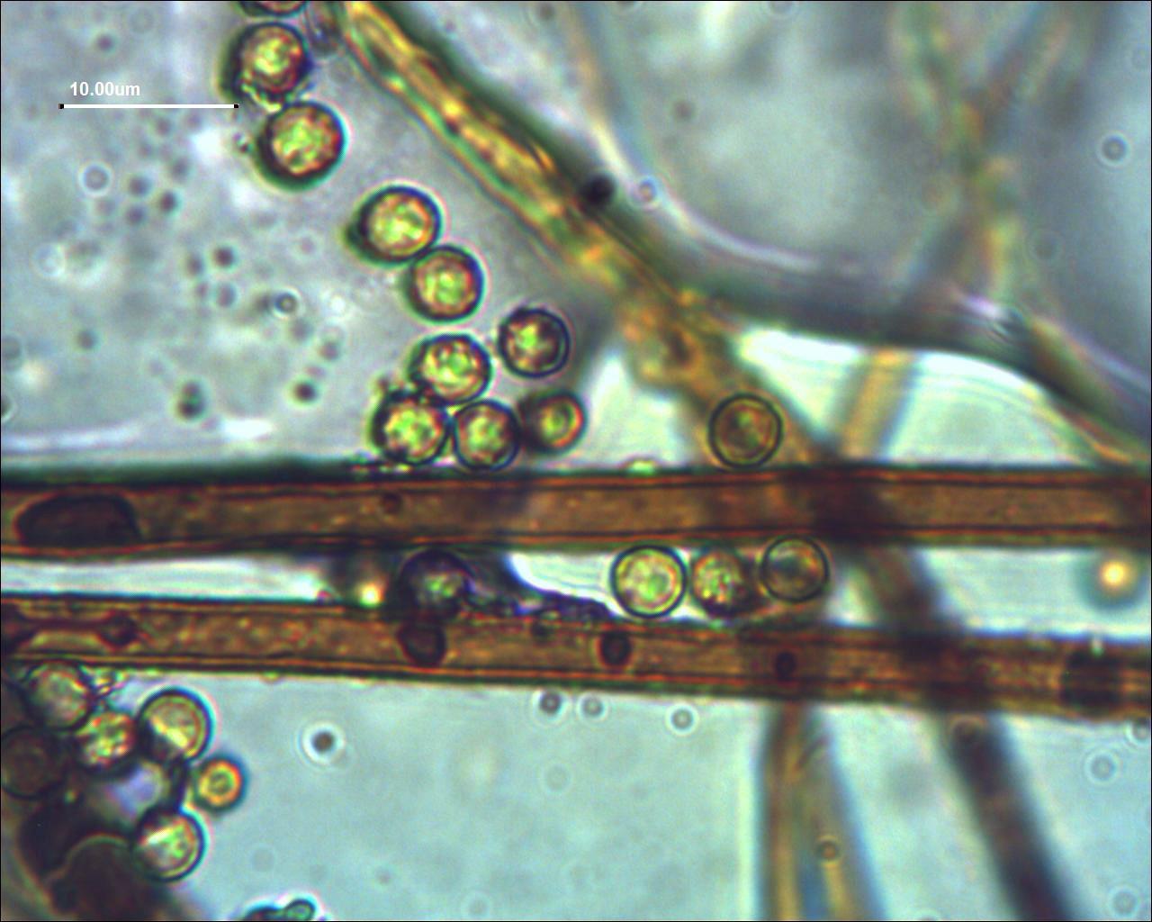 Micro: Spore