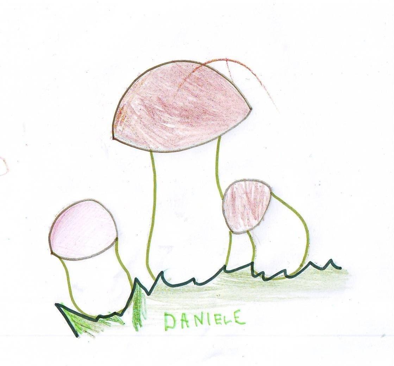 Daniele V.