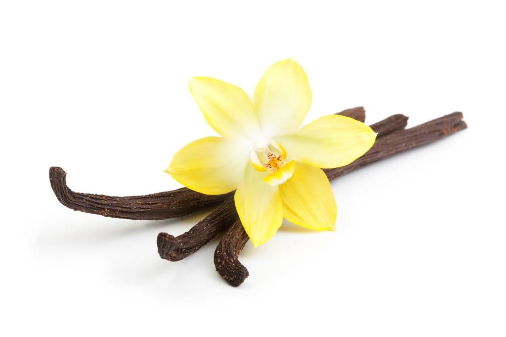 Hochwertiges echtes Vanilleextrakt - kein künstliches Aroma!
