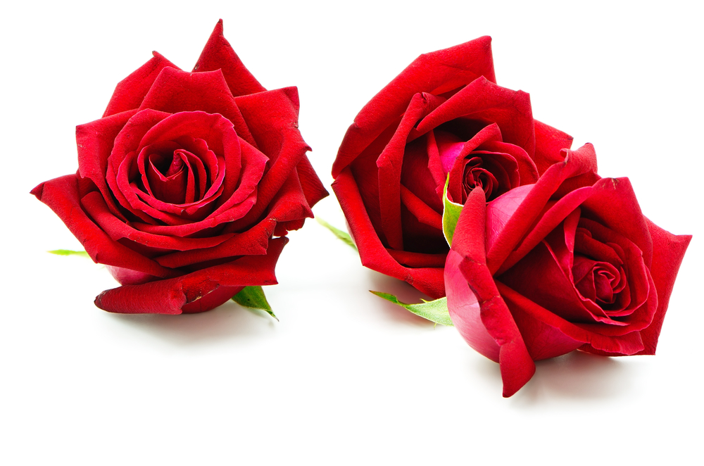 Rosenblüten - für den wunderbaren Frühlingsduft