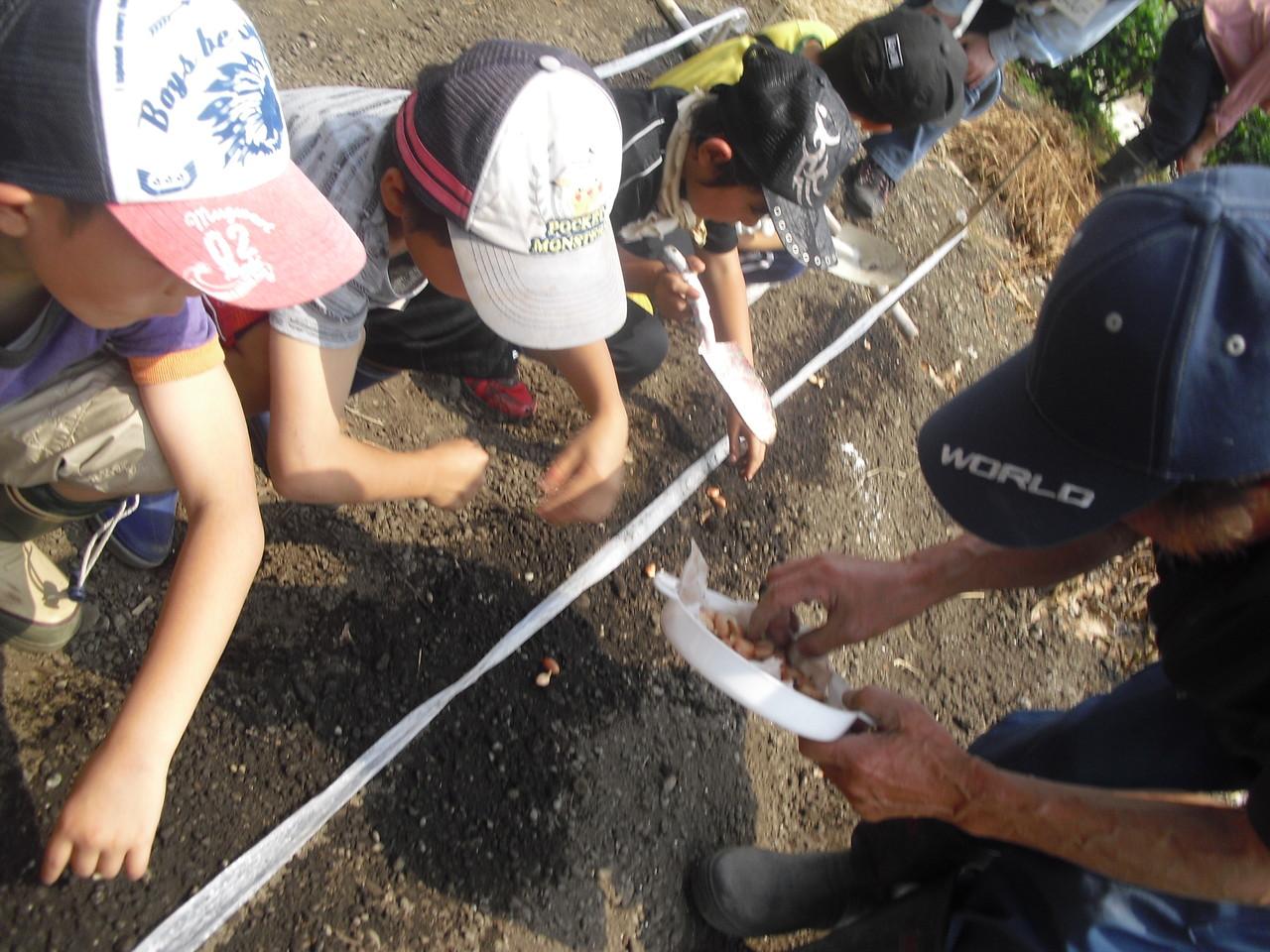 こんな感じで穴を掘って種の豆を入れ土をかぶせます。