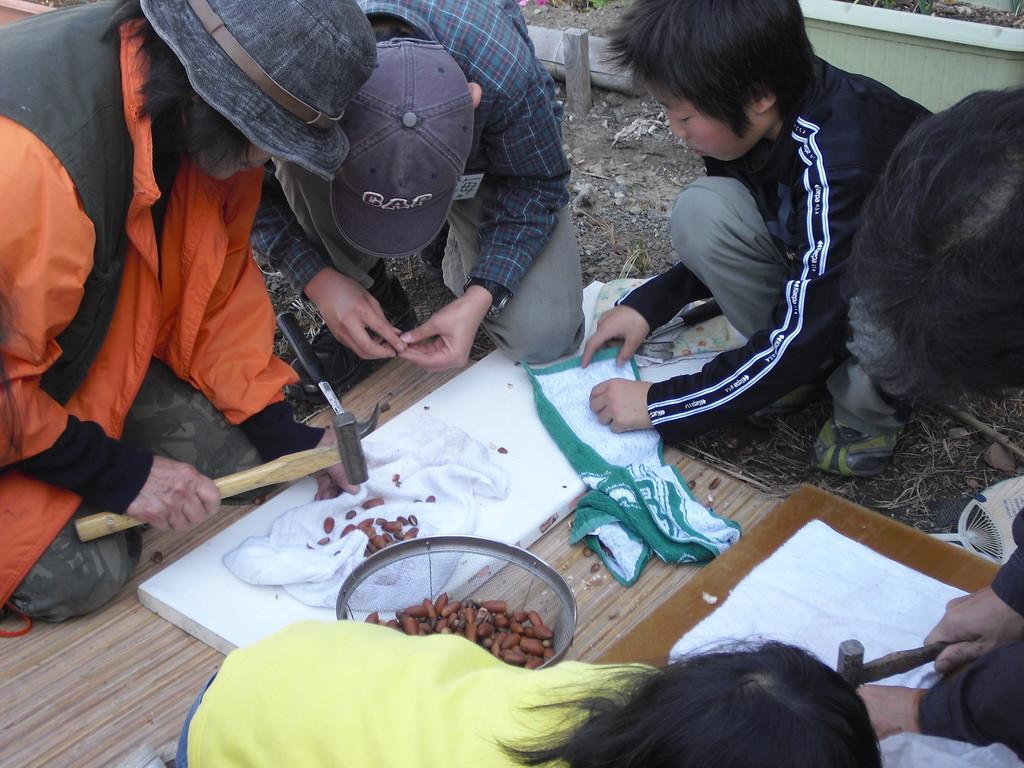 その後、かなづちやペンチを使って殻を割り、実を取り出します。