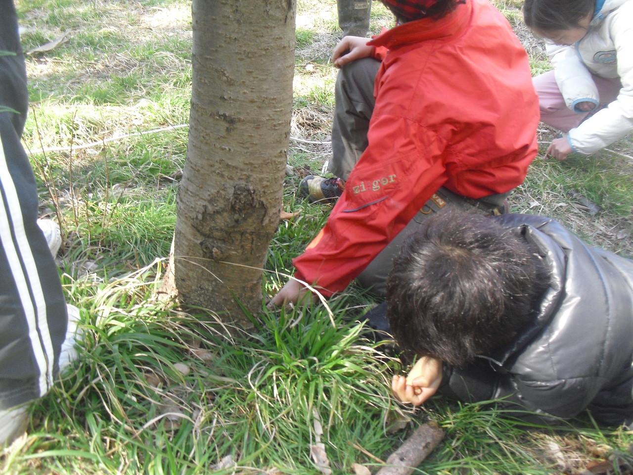さて、隠した木の実、すべて探せるでしょうか!?